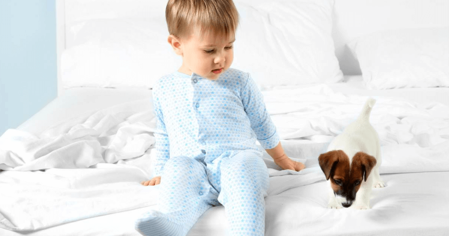 How to remove poop stains from carpet
